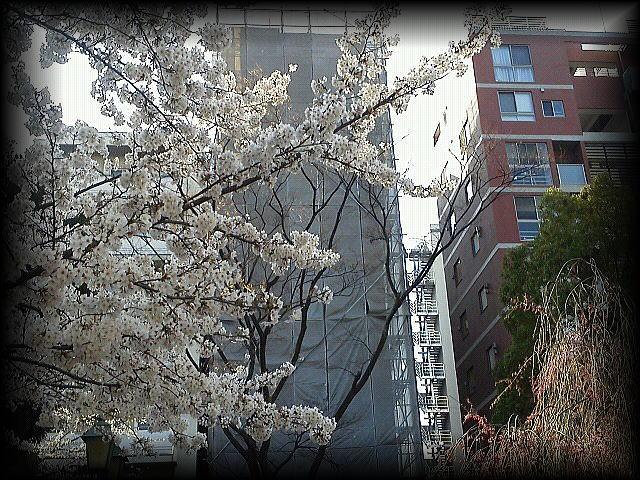 「春~の~ うらら~の~♪ 」_b0133126_1294414.jpg
