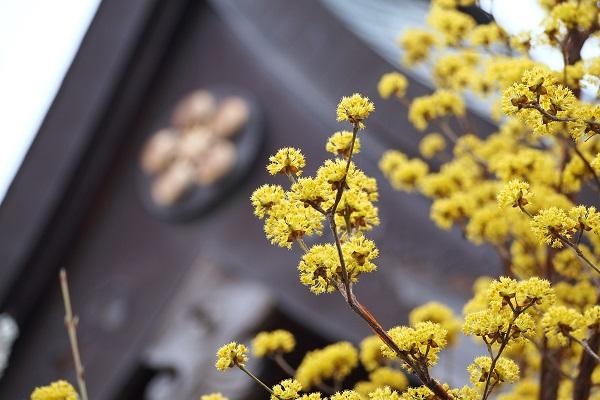 神社の境内も花ざかり   _f0214527_17211848.jpg