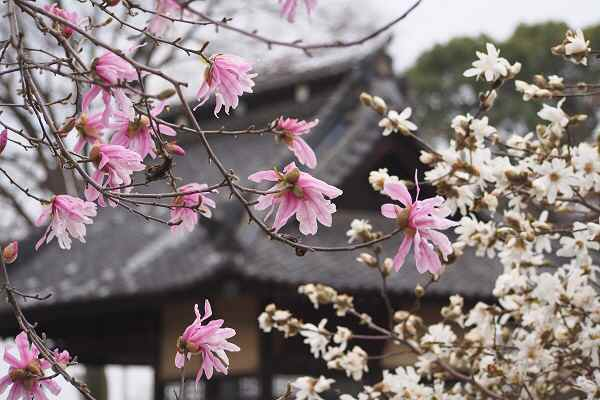 神社の境内も花ざかり   _f0214527_17214462.jpg