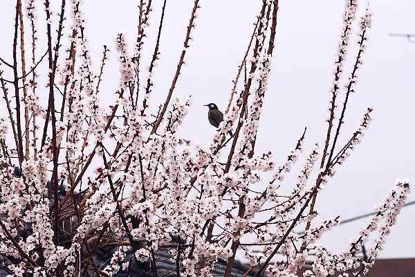 神社の境内も花ざかり   _f0214527_17223779.jpg