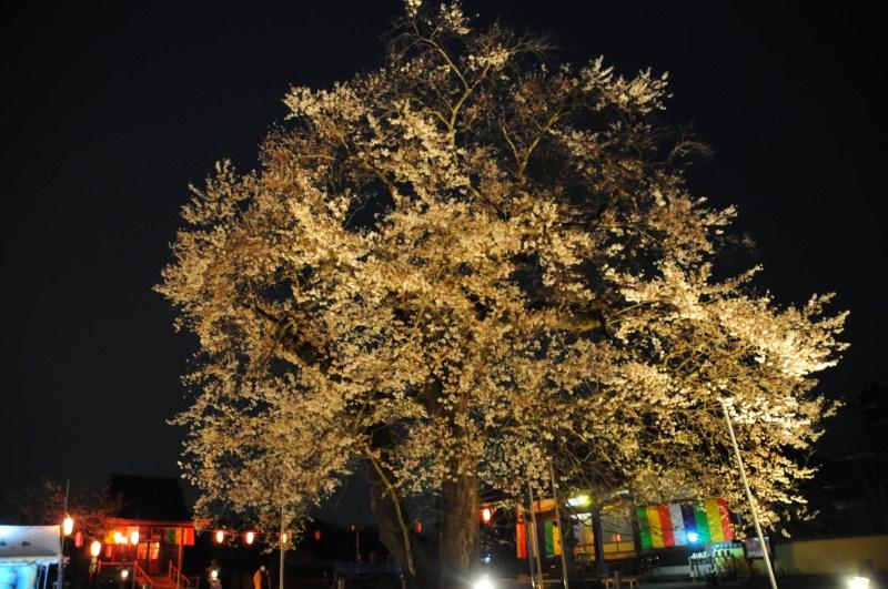 夜桜をはじめて撮影をする_f0171028_6592412.jpg
