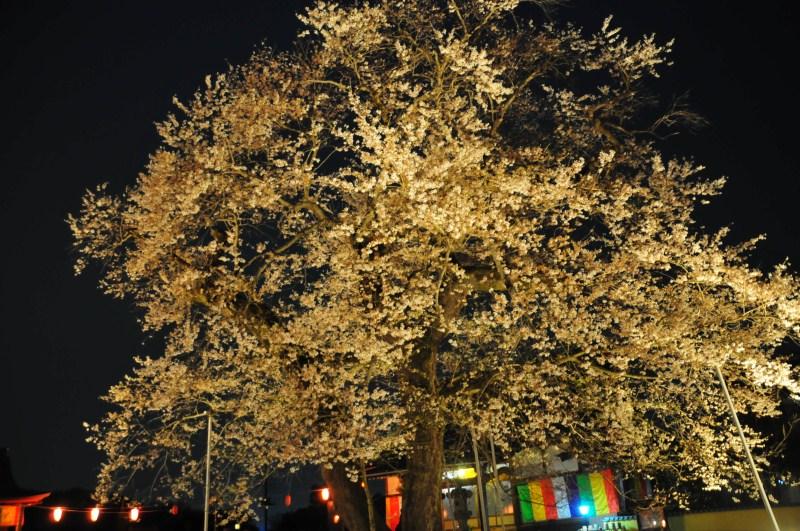 夜桜をはじめて撮影をする_f0171028_7125020.jpg