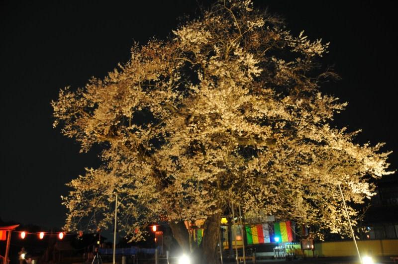 夜桜をはじめて撮影をする_f0171028_7172476.jpg
