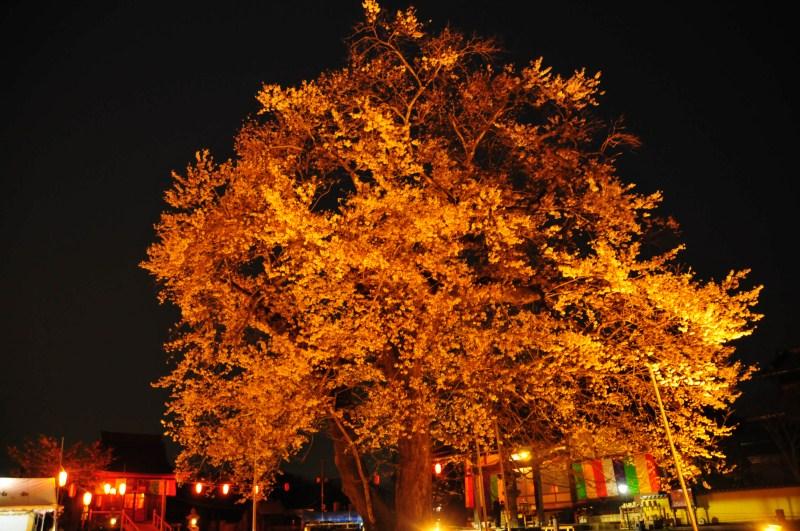 夜桜をはじめて撮影をする_f0171028_723762.jpg