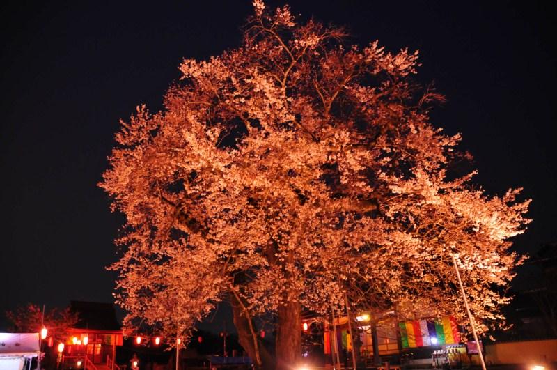 夜桜をはじめて撮影をする_f0171028_7484933.jpg