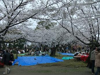 2013桜だ!花見だ!舞鶴公園!開催しました_e0149436_23374079.jpg