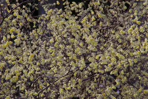 花の中での森整備_f0043750_22523084.jpg