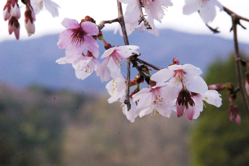 花の中での森整備_f0043750_2253458.jpg