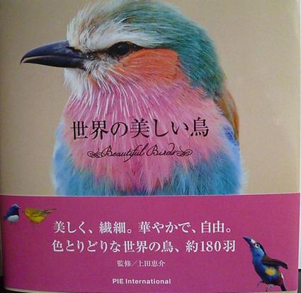 世界の美しい鳥_e0147757_235289.jpg