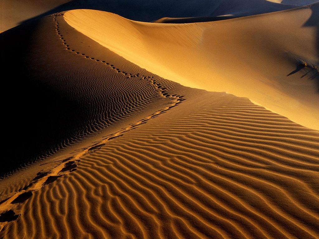 砂漠のオプショナルツアー_a0287461_21405949.jpg