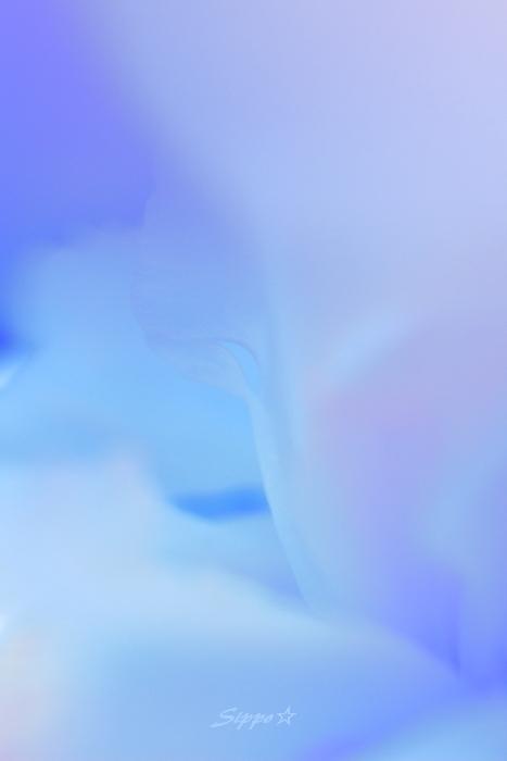 ■■ 花が魅せてくれるもの  ~ stage 3 ~ ■■_c0195662_2321765.jpg