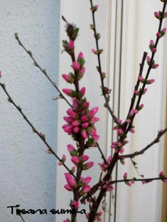 春めいてきた庭♪_a0243064_8142989.jpg