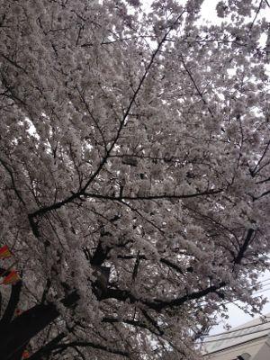 お花見(o^^o)_c0151965_14361626.jpg