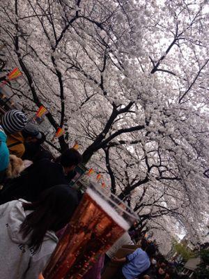 お花見(o^^o)_c0151965_14361924.jpg