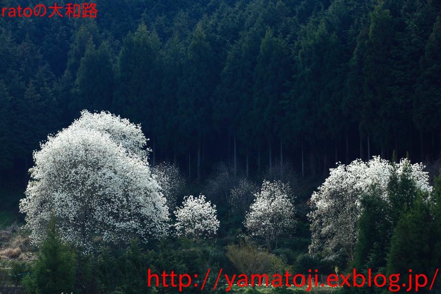f0236776_10451262.jpg