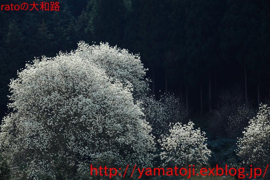 f0236776_1045156.jpg