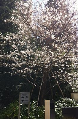 春といえばやっぱり…_d0079577_16344166.jpg