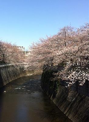 春といえばやっぱり…_d0079577_16372016.jpg