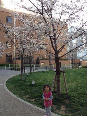 桜_f0166486_17324279.jpg