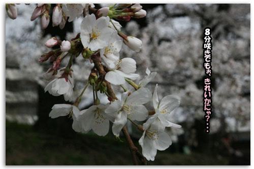 a0086698_1961511.jpg