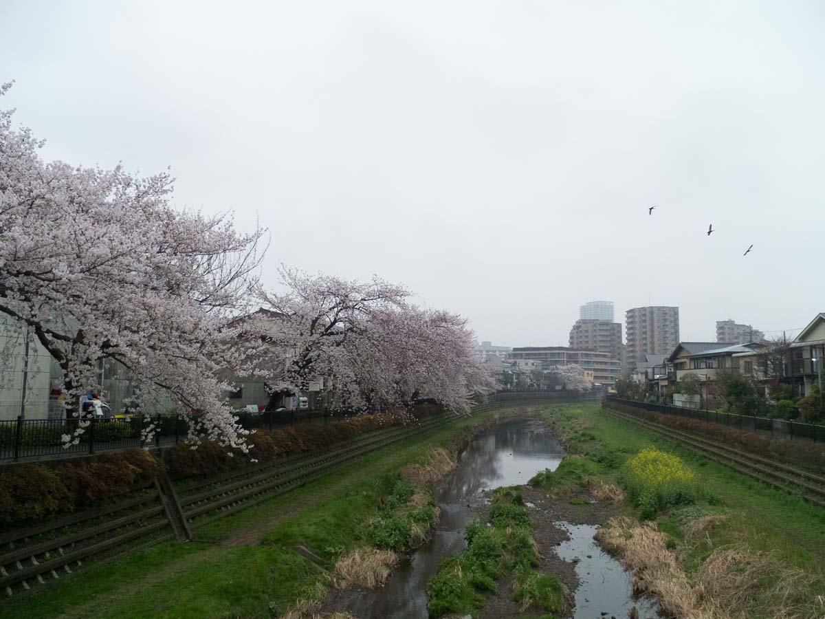 桜が咲くと雨が降る。_a0271402_20192654.jpg