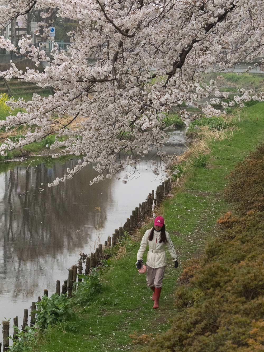 桜が咲くと雨が降る。_a0271402_20214796.jpg