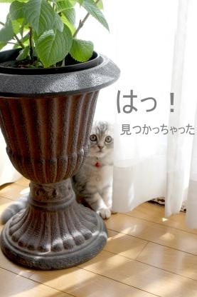 かくれんぼ♪_c0178104_19135100.jpg