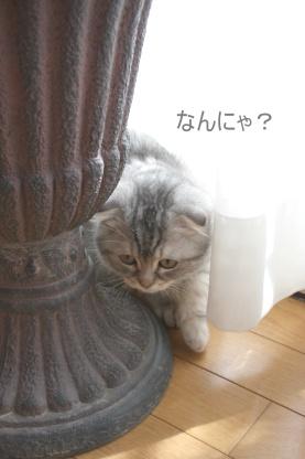かくれんぼ♪_c0178104_1921063.jpg