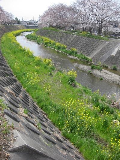 日本の春_f0181011_12211170.jpg