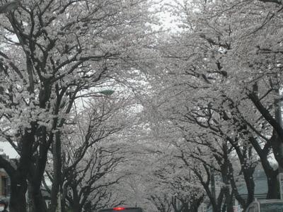 日本の春_f0181011_12224166.jpg