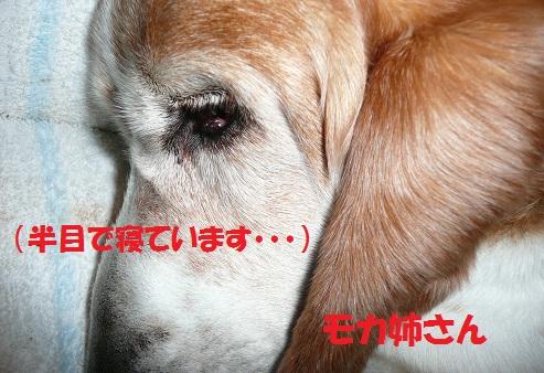 f0121712_1610244.jpg