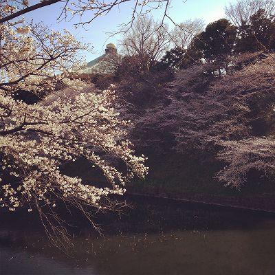 3月22日 【フランシス・ベーコン/お花見散歩/保険】_a0036513_14145222.jpg