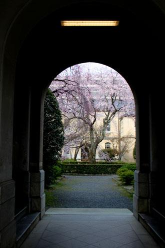 京都府庁旧本館 容保桜など_e0048413_21194110.jpg