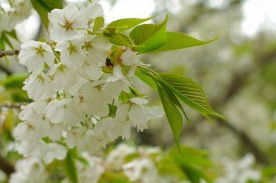 花より団子の河童です_e0234016_18193132.jpg