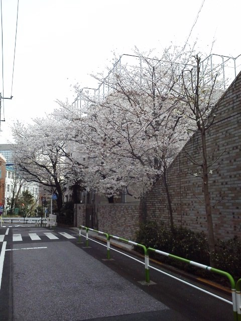 東京は桜が満開だぁ!_b0081121_6504814.jpg