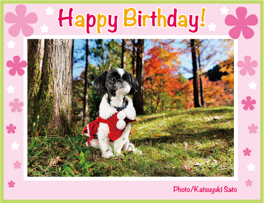 モモチちゃん、お誕生日おめでとう♪_d0102523_2323988.jpg