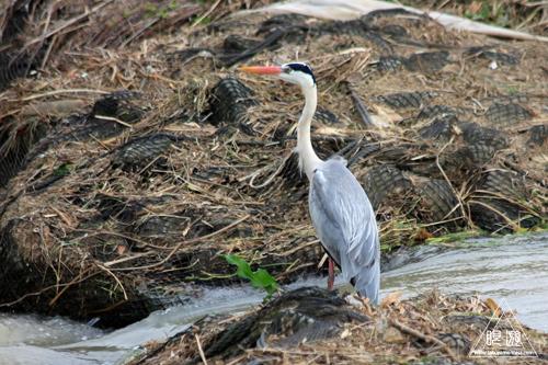 164 島根県東部 ~久々の魚類調査~_c0211532_22193765.jpg