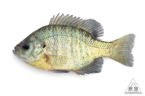 164 島根県東部 ~久々の魚類調査~_c0211532_22254194.jpg