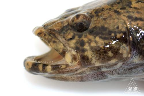 164 島根県東部 ~久々の魚類調査~_c0211532_2352230.jpg