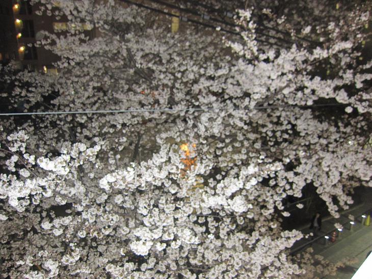 満開の桜の下で_d0155439_9474556.jpg