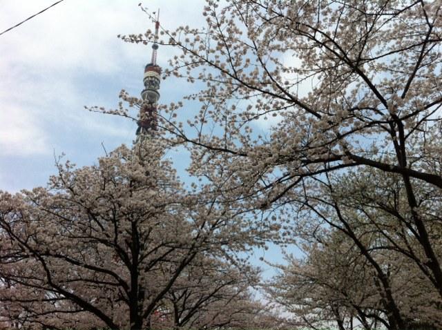 桜、咲きましたね。&3月26日(火)のランチメニュー_d0243849_23232190.jpg