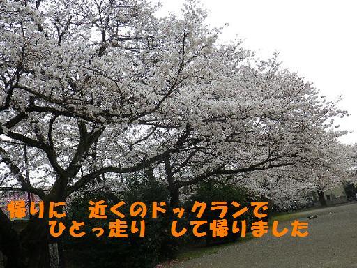 b0239151_1381241.jpg