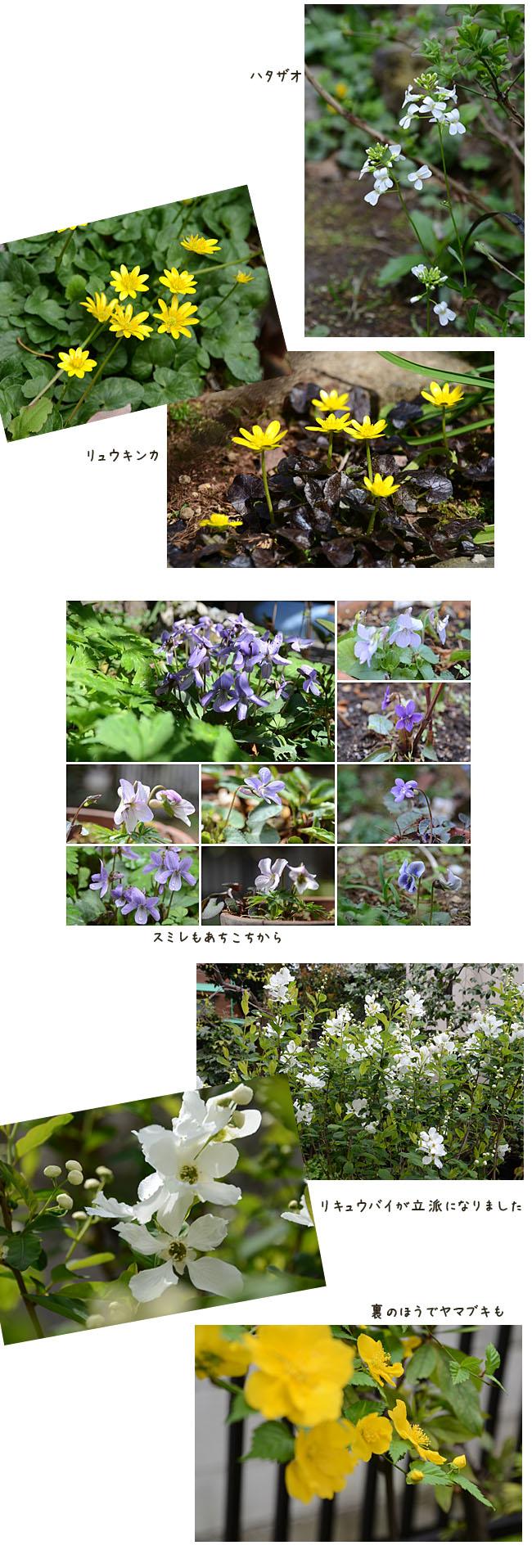 e0020954_201151.jpg