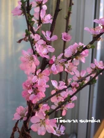 彩り豊かな「サンサシア・ピーチとカシス」_a0243064_20465946.jpg