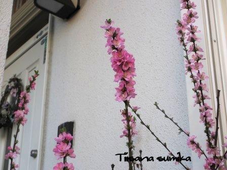 彩り豊かな「サンサシア・ピーチとカシス」_a0243064_2047104.jpg