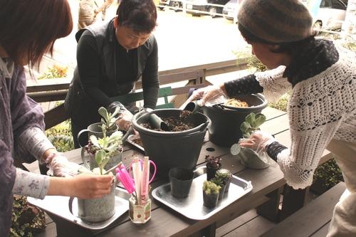 寄せ植えで楽しむ多肉植物_d0237564_10562621.jpg