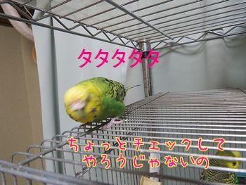 f0196665_2114147.jpg