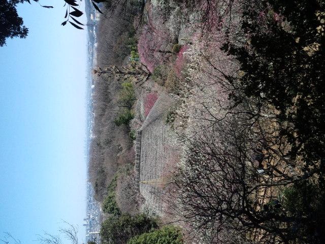 桜が...早すぎる..._b0219170_19313714.jpg