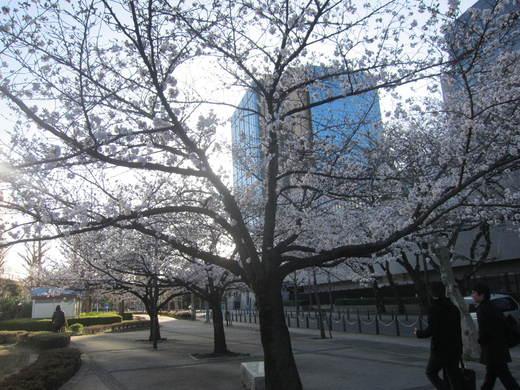桜が...早すぎる..._b0219170_19493640.jpg