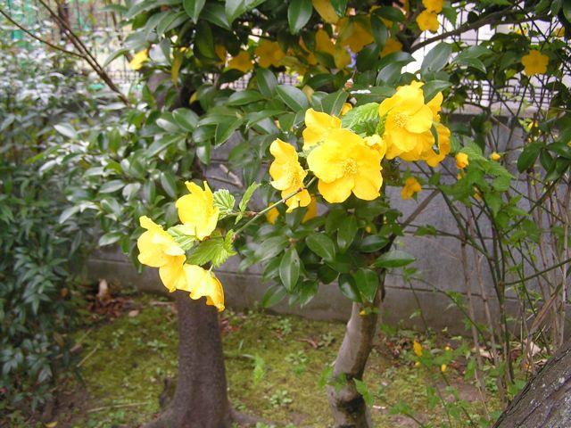 f0130894_2010443.jpg